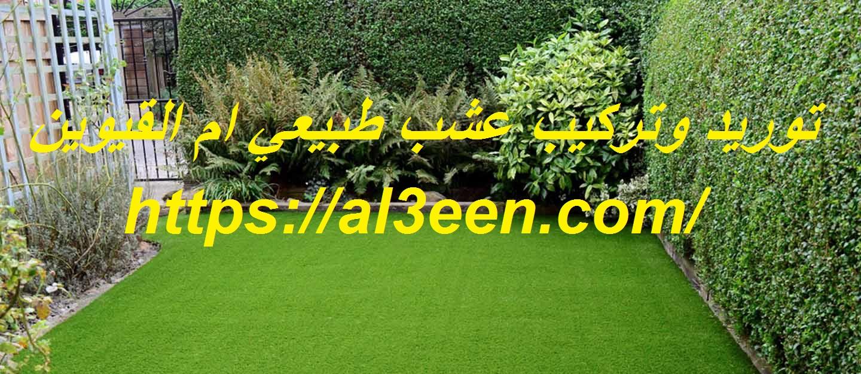 توريد وتركيب عشب طبيعي ام القيوين